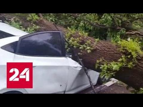В Москве и области коммунальщики борются с последствиями урагана