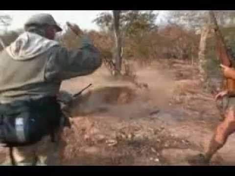 leão ataca caçadores. (Lion attacks hunter)