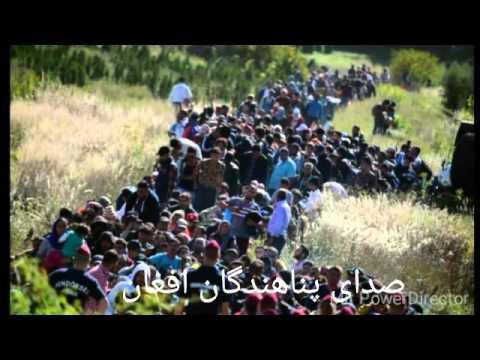 اروپا پناهجویان مرد را اخراج می کند  اکثریت افرادی