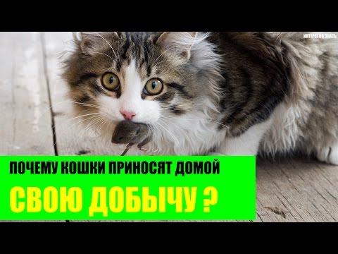 Почему кошки приносят убитых животных домой