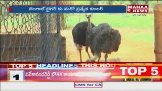 Special Focus On SV Zoo Park In Tirupati