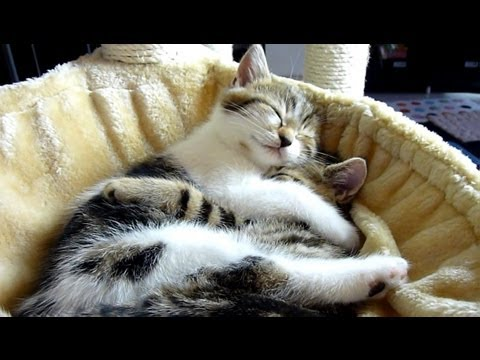 Top 20 Kittens and Cats Hugs