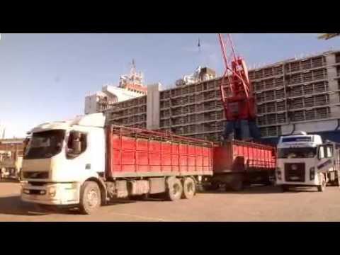 Así viajan 10.000 terneras uruguayas rumbo a China