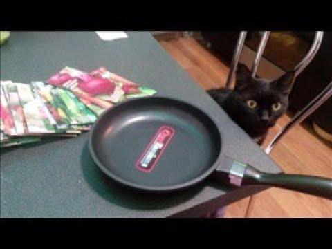 СЕМЕНА из интернет-магазина/покупка новой сковородки