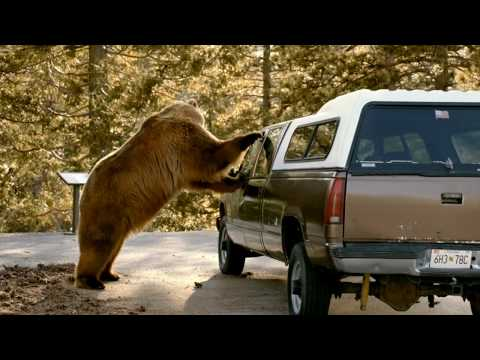 TUMS BEAR COMMERCIAL