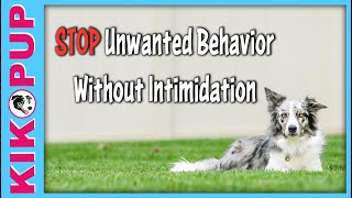 STOPPING unwanted behavior without INTIMIDATION - Dog Training