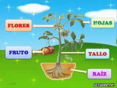 Partes de la youtube for Nombres de arboles en ingles