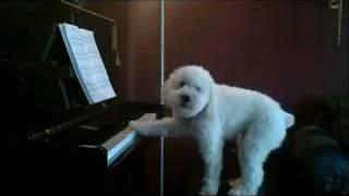 Download Funny puppy's song | কুকুর ছানার গান | কিভাবে কুকুর ছানা গান করে 3Gp Mp4
