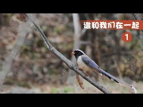 中國-誰和我們在一起