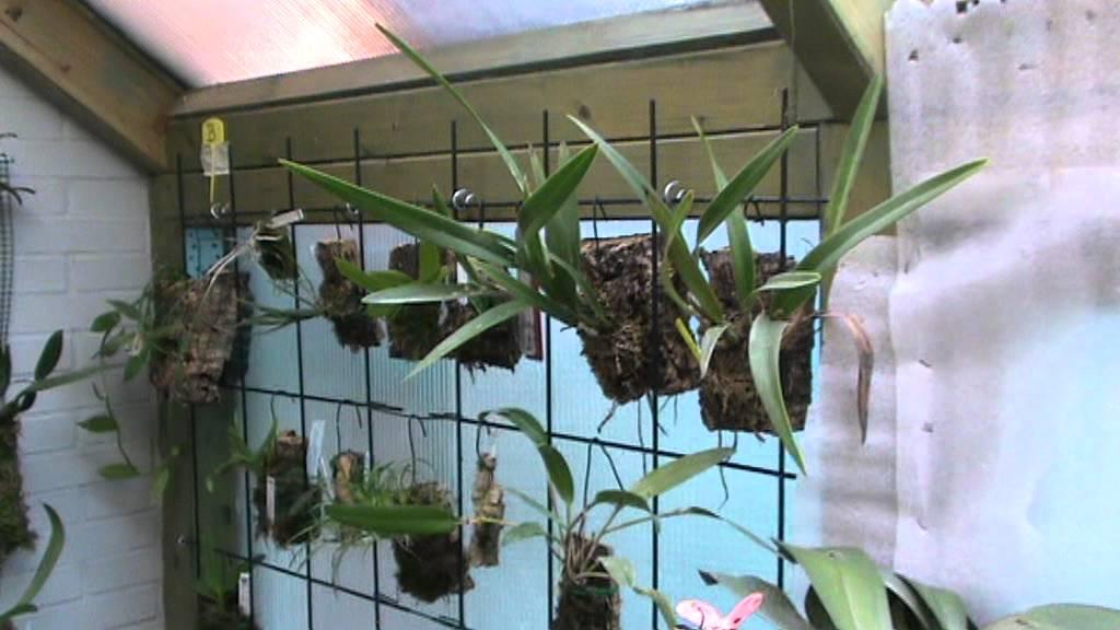 invernadero de orqu deas 6 enero 2012 youtube On como construir un vivero forestal