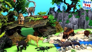 Wild Animal Toys and Insects Bugs Safari LTD  - Learn Animal Names For Kids