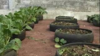 Siembran verduras en llantas de autos en Ecatepec