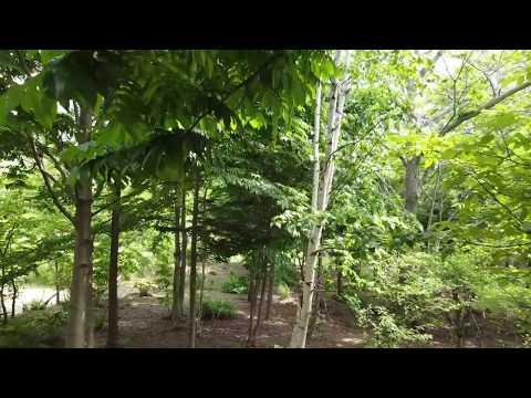 雑木林で操縦トレーニング (動画)