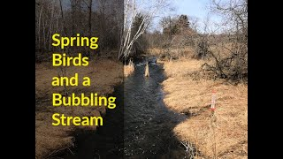 Spring Birds and a Bubbling Stream