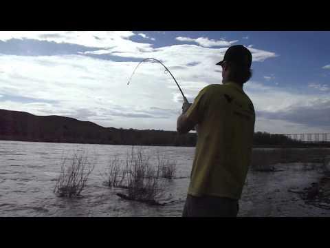 South Saskatchewan River, Sturgeon fishing