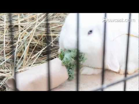 How to Set Up Rabbit Hutches & Cages | Small Pets