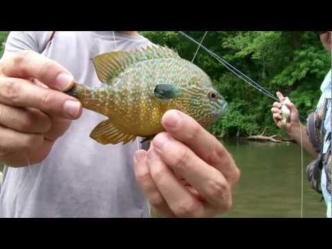 Fly Fishing Oklahoma, Birds of Sequoyah - Captain Troy