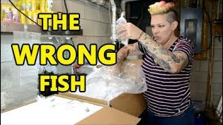 They sent the WRONG fish! A day in the life of a Fish Pimp