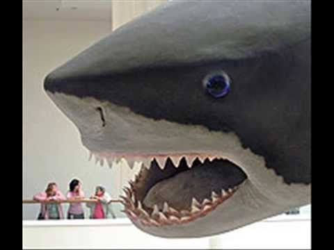 Megalodon [worlds biggest shark] Video
