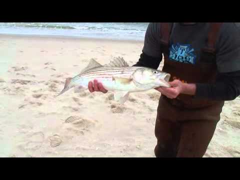 Bite Club episode 1-NJ Bluefish and Striped Bass surfcasting