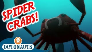 Octonauts - The Spider Crabs | Full Episode | Cartoons for Kids