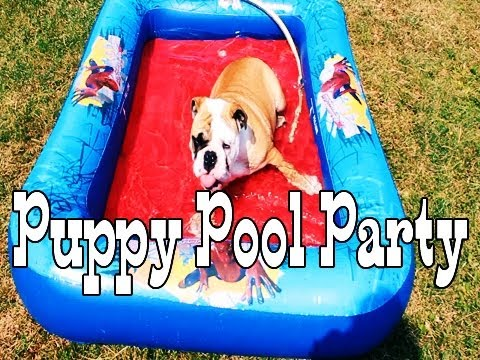 Puppy Pool Party Puppy Pool Party