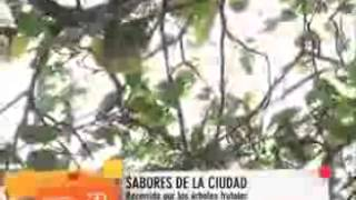 Buscando y utilizando los árboles frutales públicos de la ciudad (Banda 3.0)