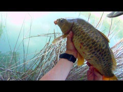 Pesca de carpa con lombriz y corcho en rio
