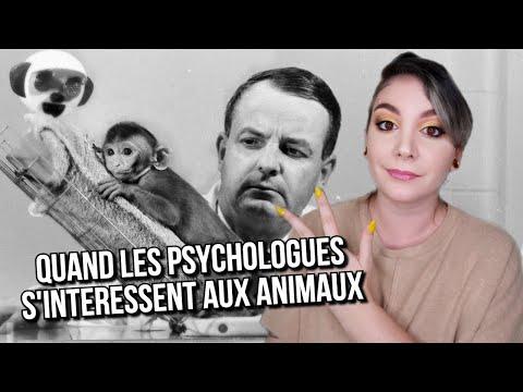 3 EXPÉRIENCES de Psychologie basées sur des ANIMAUX
