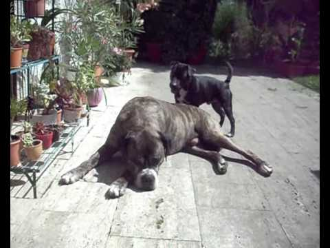 Heeelp!!! My Dogs are gay :)