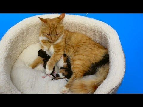 Cat baby Shower  Murka's party Сколько котят родила КОШЕЧКА Мурка в Коробке от CHUPA CHUPS lollies