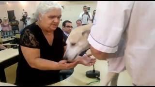 Idosa reencontra cão que espancou impiedosamente