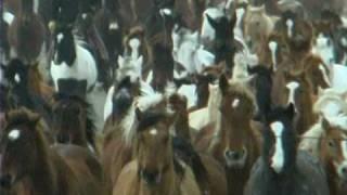 Watch Waylon Jennings Wild Ones video