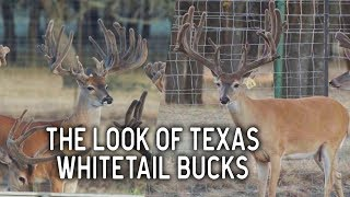 The Look of Texas at Deer Star Breeders | Deer and Wildlife Stories