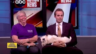 Pet of the week: Bentley is a 12-year-old Pekingese seeking a loving home