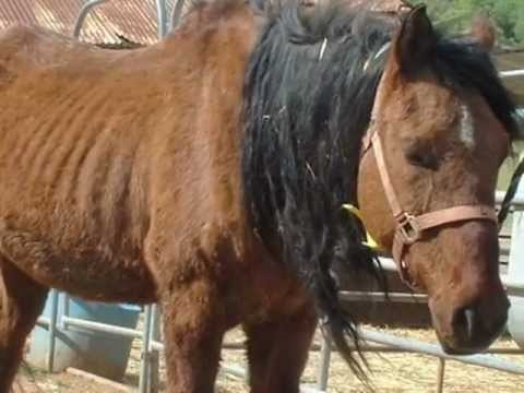 Susanville Rescued Horses