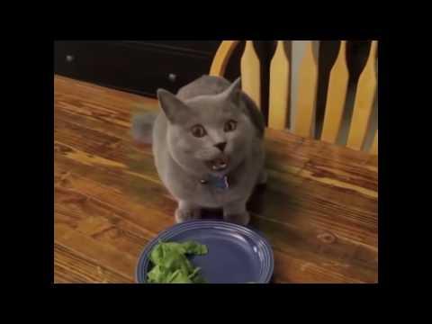 Самый невероятный кот  Смешной кот скрылся от хозяина
