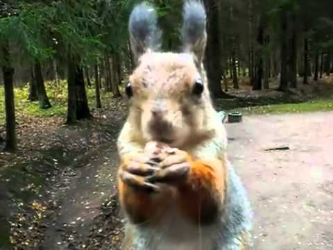 Angry Squirrel (Sweet!)