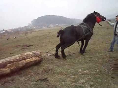 Calul lui Braneanu Vulcan