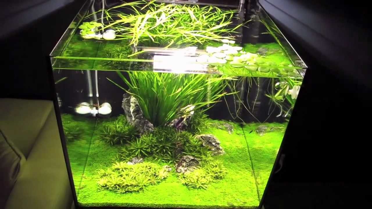 Iwagumi Aquascape 60x60x60 Youtube
