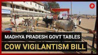 Madhya Pradesh govt tables cow vigilantism bill