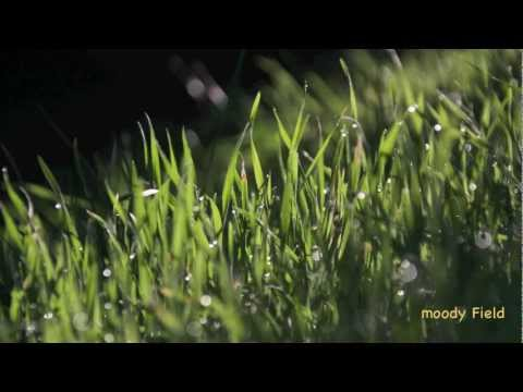 Meditation Music - Relaxing Music, Healing (Healing Grass- Moody Field)