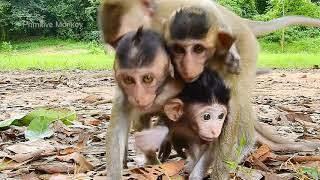 So Cute Newborn Baby, Monkey Baby Lovely, Very Adorable Baby Monkey