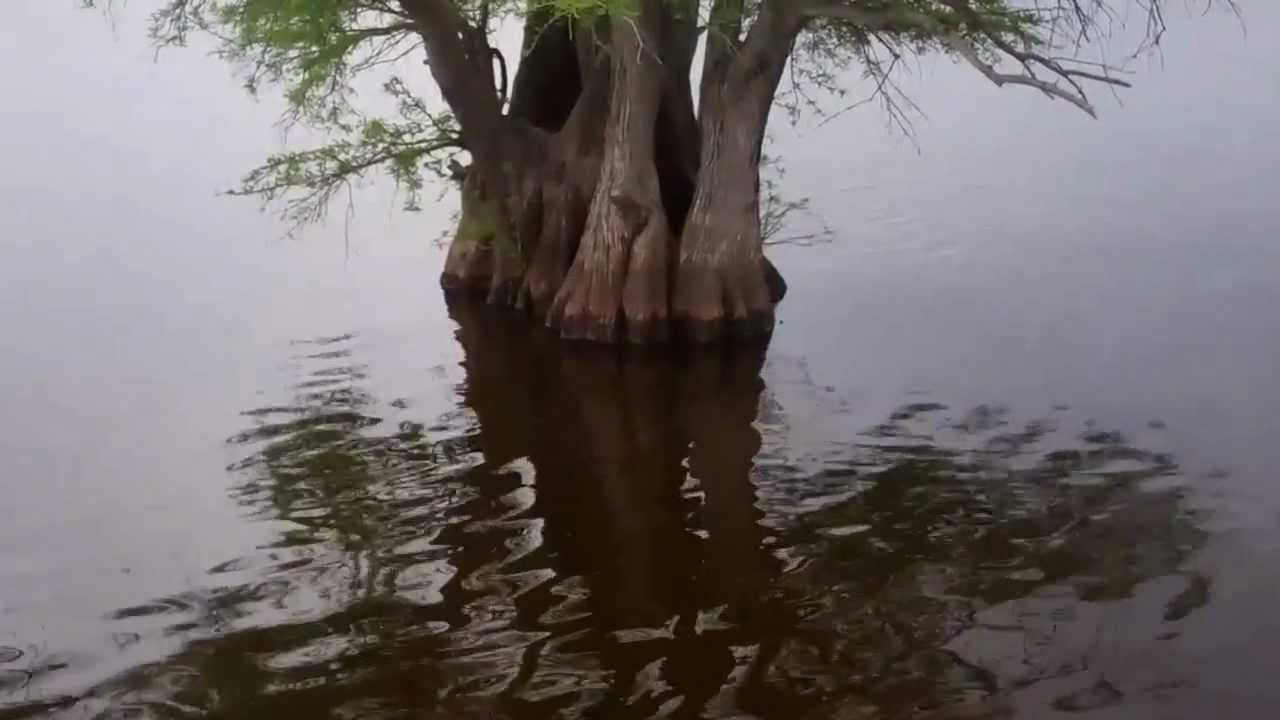 Reelfoot lake april 7 josh and staci gowan youtube for Reelfoot fishing report