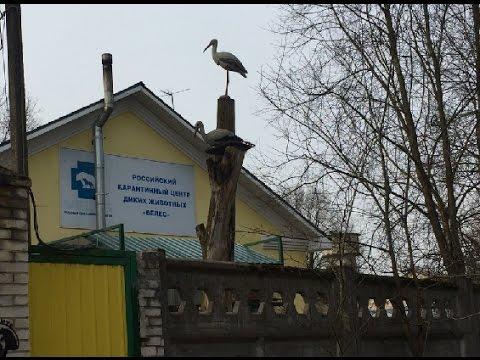 И не только о Еде!!! Поездка в Российский карантинный центр диких животных ВЕЛЕС!!!