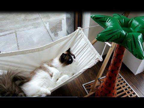 Timo the Cat swinging on his hammock