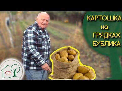 Бублик Б. А. Картошка на грядках 🍠/ Огород без хлопот 👍