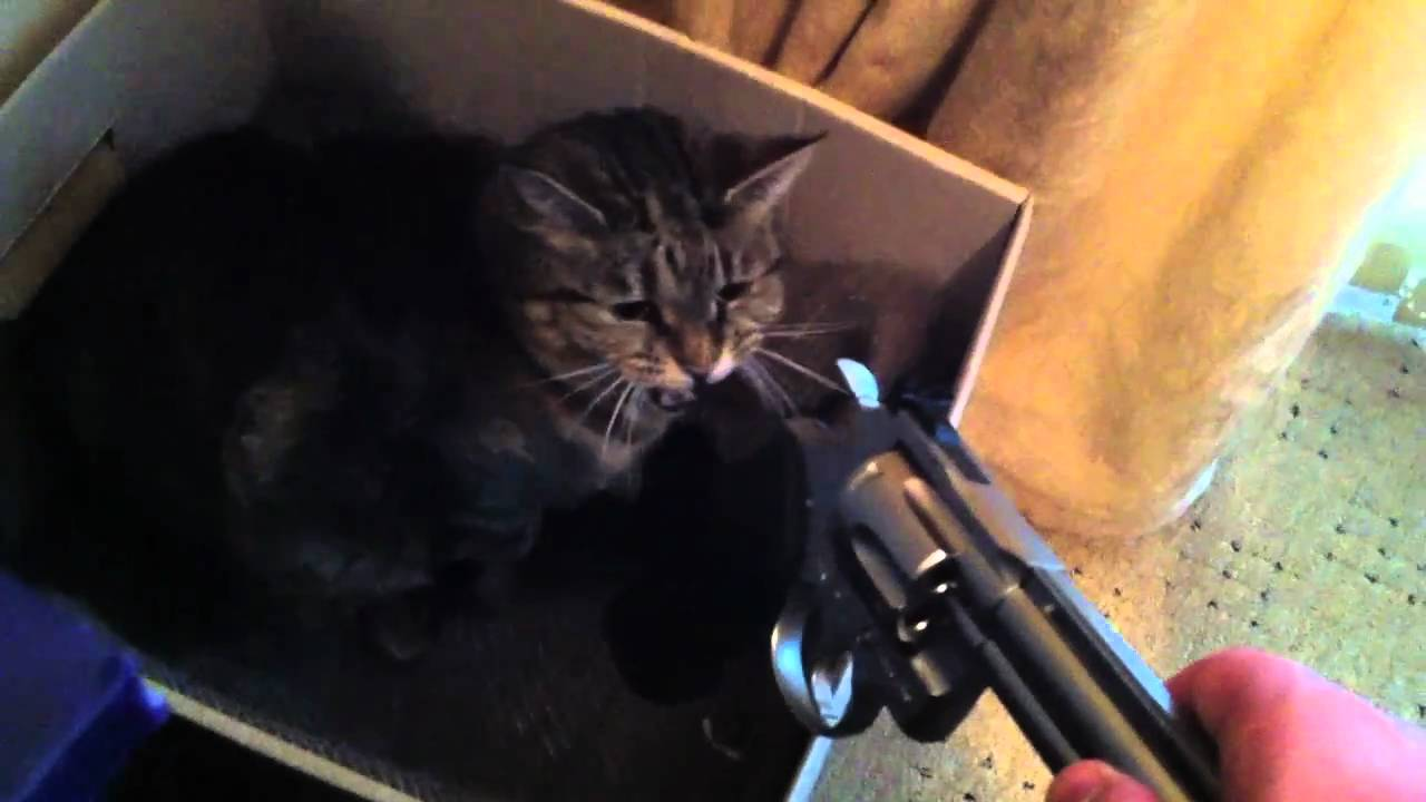 Cute Kittens with Guns Images & Pictures - Findpik
