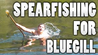 [GRAPHIC] Spearfishing for Bluegill! Cleaning and Cooking!