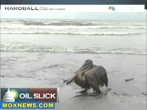 Republicans Block BP Oil Spill Investigation in Senate